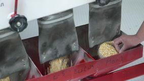 Calidad de prueba del ayudante de laboratorio de las semillas del maíz metrajes