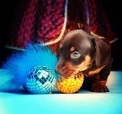 Calidad del estudio del perro basset del Año Nuevo Fotografía de archivo libre de regalías
