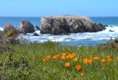 Calif-Mohnblumen mit Ozean-Hintergrund Lizenzfreies Stockfoto