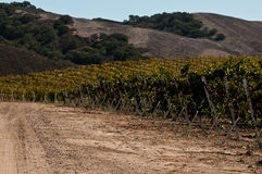 Califonria Vineyard Road Stock Photography