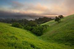 Californië Chaparral bij Zonsondergang Stock Afbeeldingen