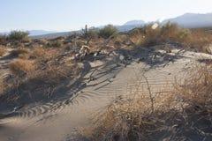 Californië, het Nationale Park van de Doodsvallei, Zandduinen met droog Royalty-vrije Stock Foto's
