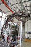 California Academy of Sciences. Dinosaur skeleton in the lobby of California Academy of Sciences, San Francisco, USA Stock Photos