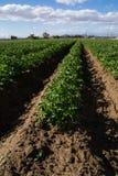 The California agriculture. Stock Photos