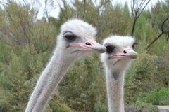 California Birds Stock Photo