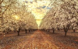 California Blossom Trail stock photography