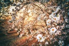 California Blossom Trail stock photos