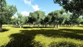 California buckeye Aesculus californica trees stock video
