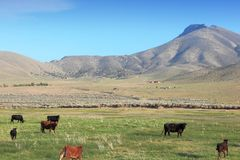 California cattle ranch Stock Photos