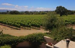 california centrali wybrzeża winnicy Fotografia Stock