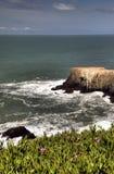 California coast. Bird, Island off the central coast of California, Golden Gate National Recreation Area Stock Photos