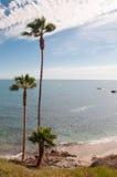 California Coast. Tall Palm Trees on the Coast of California royalty free stock photo