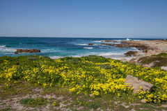 California Coast Landscape and Wildflowers Royalty Free Stock Photo