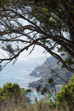 California coast with tree framing. This is an image of the California Coasts crystal clear blue water from the cliffs above using a tree for framing royalty free stock photo