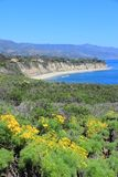 California coast. California, United States - Pacific coast view in Malibu. Point Dume State Beach with Giant Coreopsis (Giant sea dahlia) flowers Royalty Free Stock Photo
