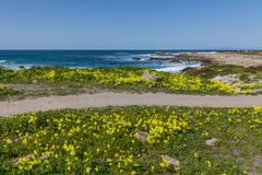 California Coast and Wildflowers Stock Image