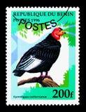 California Condor (Gymnogyps californianus), Birds serie, circa. MOSCOW, RUSSIA - NOVEMBER 26, 2017: A stamp printed in Benin shows California Condor Royalty Free Stock Images
