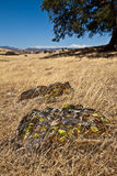 California Countryside. Beautiful Golden California Countryside with colorful mossy rock in foreground Stock Photo