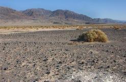 California, Death Valley National Park, Desert vegetation Royalty Free Stock Image