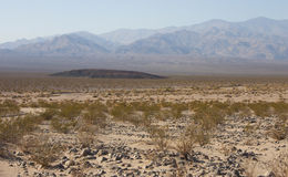 California, Death Valley National Park, Desert vegetation Royalty Free Stock Photos
