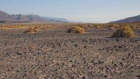 California, Death Valley National Park, Desert vegetation Stock Photo
