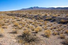 California, Death Valley National Park, Desert vegetation Royalty Free Stock Photo