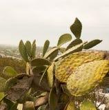 california diego san Стоковое Фото