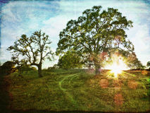 California Dreaming. Old oak trees with a rural road at sunset with textures added for an artistic look royalty free stock photo
