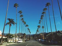 California dreaming. Rows of Palm trees in sunny California Royalty Free Stock Images