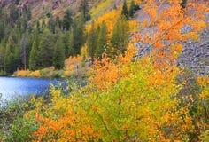 California fall foliage Stock Photo