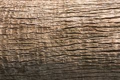 California Fan Palm Body Texture for Natural Background stock photography