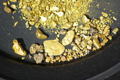 California Gold Nuggets. Gold nuggets, flakes and dust mined from the creeks and rivers of california Royalty Free Stock Images