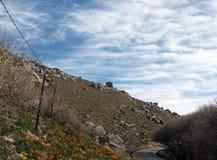 California Golden Poppies near Lake Isabella Stock Image