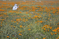 California Golden Poppy and Shadow Stock Images