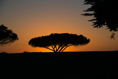 California Golf Course at Sunset Stock Image