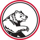 California Grizzly Bear Swipe Paw Circle Retro Stock Photography