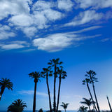 California high palm trees silohuette on blue sky Royalty Free Stock Photography