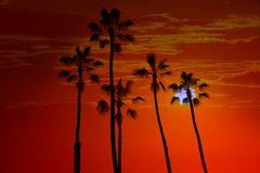 California high palm trees sunset sky silohuette Stock Photos