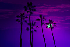 California high palm trees sunset sky silohuette Stock Photo