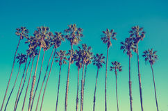 California high palms on the blue sky background Stock Image