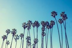 California high palms on the blue sky background Stock Photos