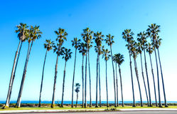 California high palms on the blue sky background Royalty Free Stock Image