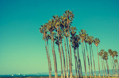 California high palms on the blue sky background Stock Images