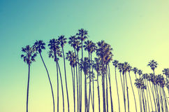 California high palms on the blue sky background Stock Photography