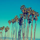 California high palms on the blue sky background Royalty Free Stock Photos