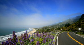 California Highway No. 1. Coastal highway No. 1 along the shore of Northern California. In the foreground is the Sky Lupine (lupinus nanus). It is a member of Royalty Free Stock Photos