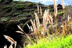 California highway 1 one Pacific ocean. California blue sky on the coast near big sur fence green grass buck wheat stock photos