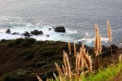 California highway 1 one Pacific ocean. California blue sky on the coast near big sur fence green grass buck wheat stock images