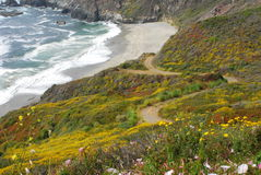 California Highway One. Sights along California Highway One. Wildflowers blanket the hills, waves crash on rocky shores, sea lions bask in the sun, fog rolls in Stock Image