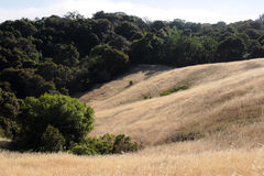 California hillside Royalty Free Stock Photos